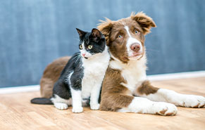 picture of a dog and a cat